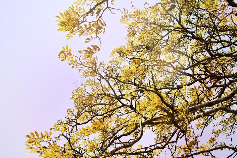 Zachte nadruk, mooie gele boom backgroun stock afbeelding