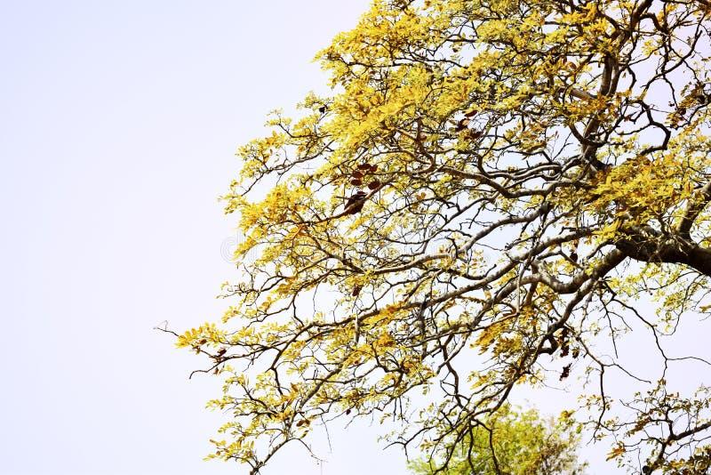 Zachte nadruk, mooie gele boomachtergrond royalty-vrije stock afbeeldingen