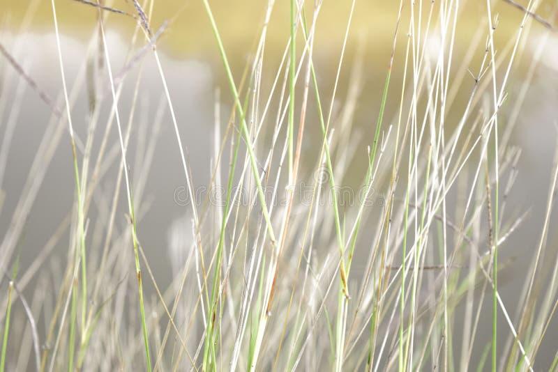 Zachte nadruk, mooie grasachtergrond stock foto