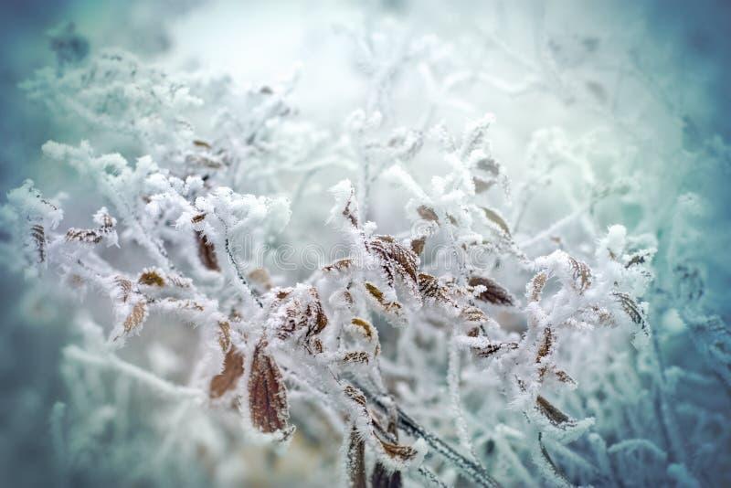 Zachte nadruk op bevroren installatie - bladeren royalty-vrije stock fotografie