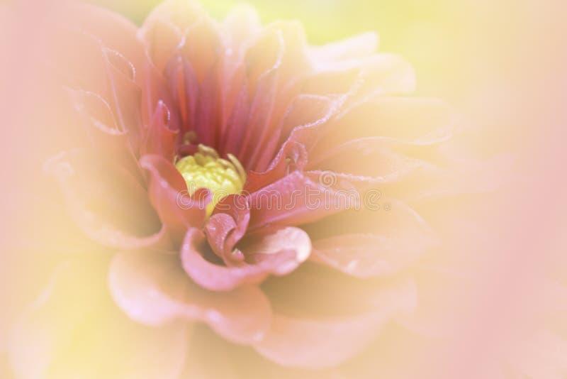 Zachte nadruk, roze bloemachtergrond stock foto's