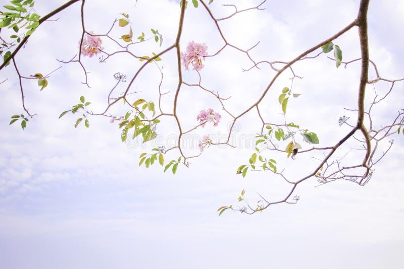 Zachte nadruk, roze bloemachtergrond royalty-vrije stock foto's