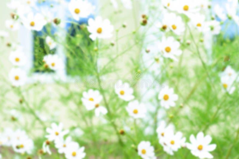 Zachte nadrukfoto in de Mooie bloem van de Kosmosbloesem in de ochtend op de achtergrond van het aardonduidelijke beeld Witte blo royalty-vrije stock afbeeldingen