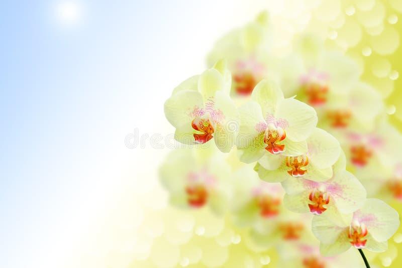 Download Zachte Pastelkleur Gekleurde Orchideebloemen Op Aard Stock Foto - Afbeelding bestaande uit groen, kleur: 39108786