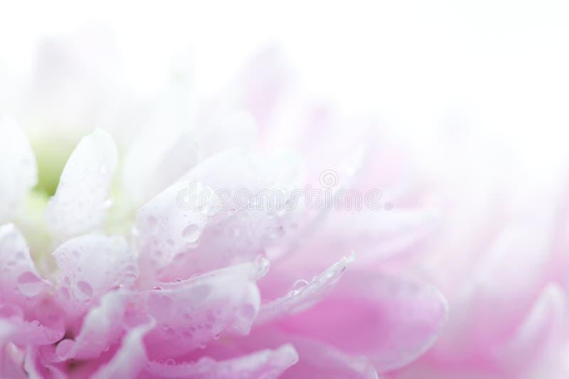Zachte purpere bloem stock fotografie
