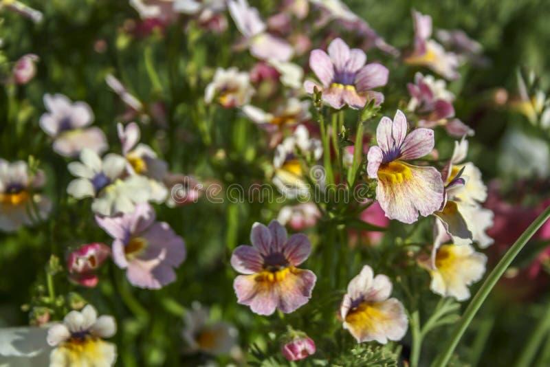 Zachte roze bloemen die op de schoen van een vrouw lijken Selectieve nadruk, geschikt voor achtergrond royalty-vrije stock afbeelding