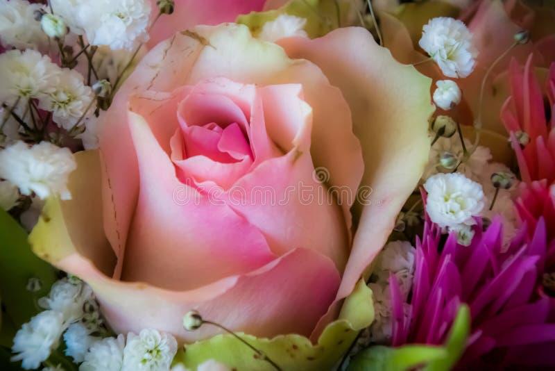 Zachte roze nam achtergrond toe stock foto