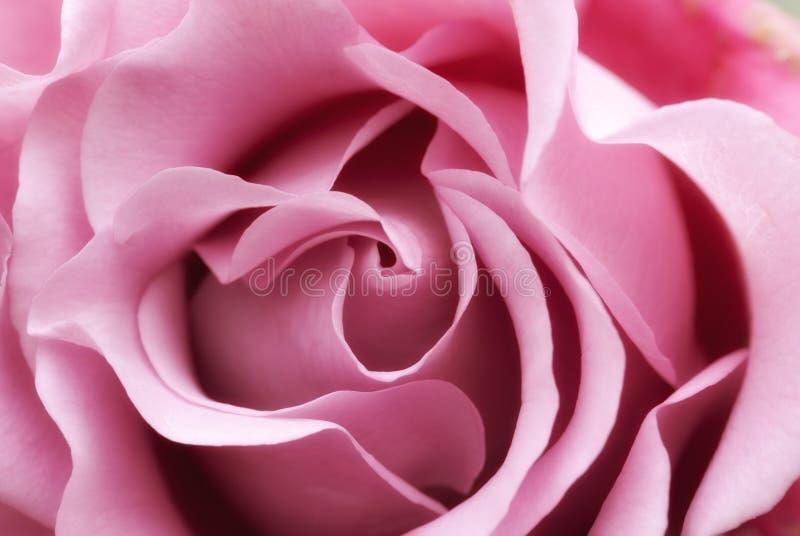 Download Zachte roze nam toe stock afbeelding. Afbeelding bestaande uit bloemen - 29513225