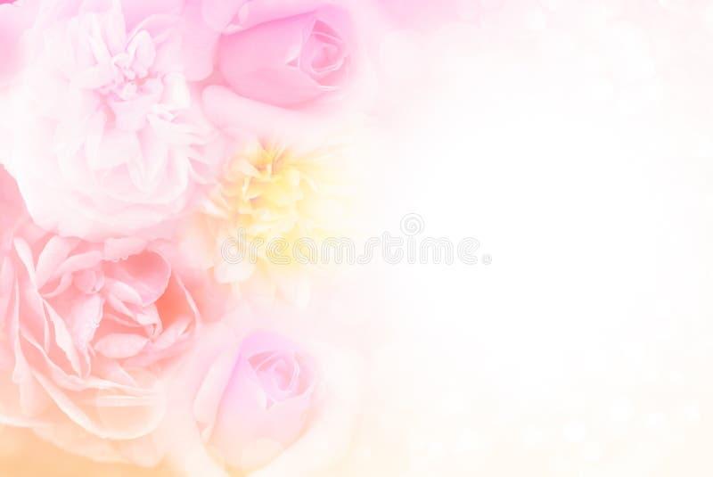 Zachte roze purpere en gele rozenachtergrond in pastelkleurtoon voor valentijnskaart royalty-vrije stock fotografie