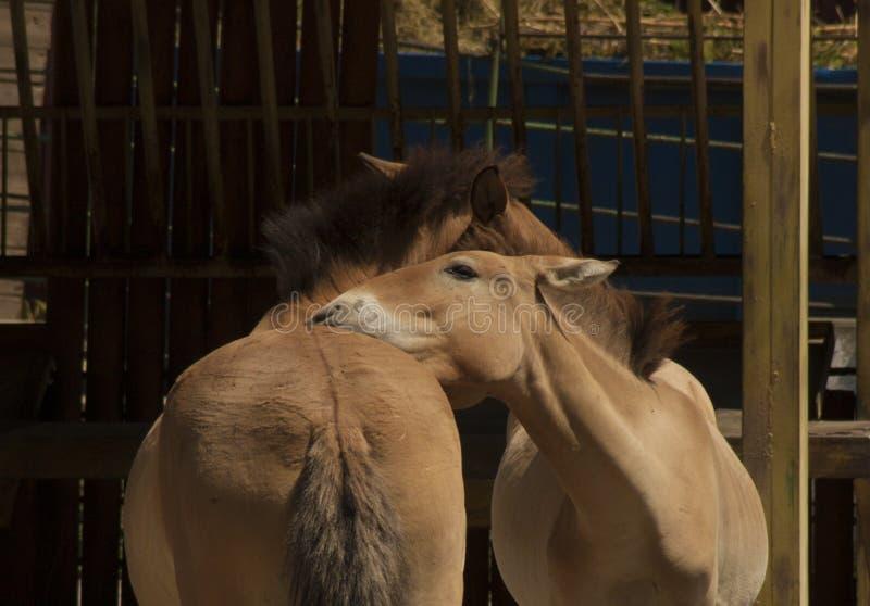 Zachte wild paarden stock fotografie