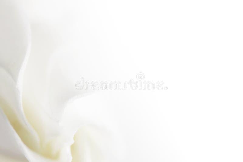 Zachte witte bloemachtergrond stock foto's