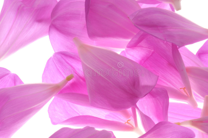 Zacken Sie Blumenblätter aus lizenzfreies stockbild