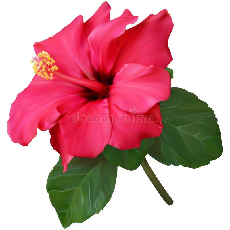 Zacken Sie Hibiscus-Blume aus lizenzfreie abbildung