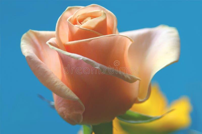 Zacken Sie Rosafarbenes Auf Himmelblau Aus Lizenzfreies Stockbild