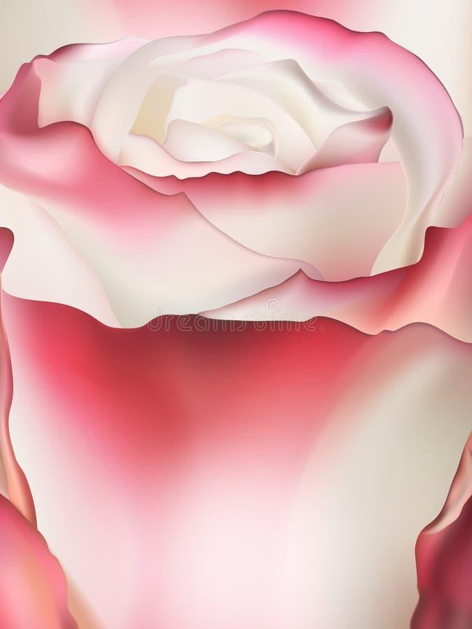 Zacken Sie rosafarbenes Makro aus ENV 10 stock abbildung