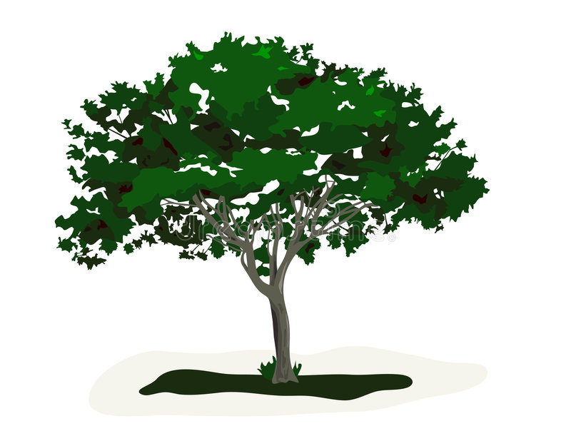 zaczarowany drzewo royalty ilustracja