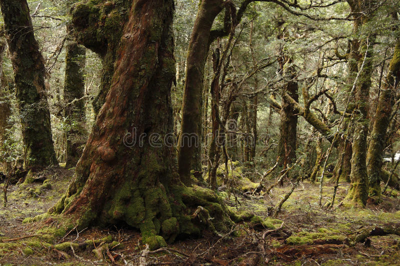 zaczarowany las zdjęcie royalty free