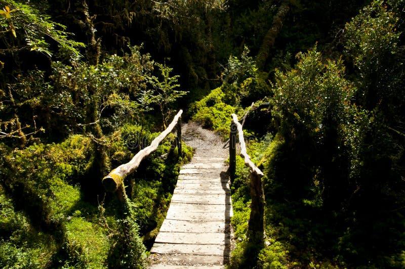 Zaczarowany las Chile - Queulat park narodowy - zdjęcia royalty free