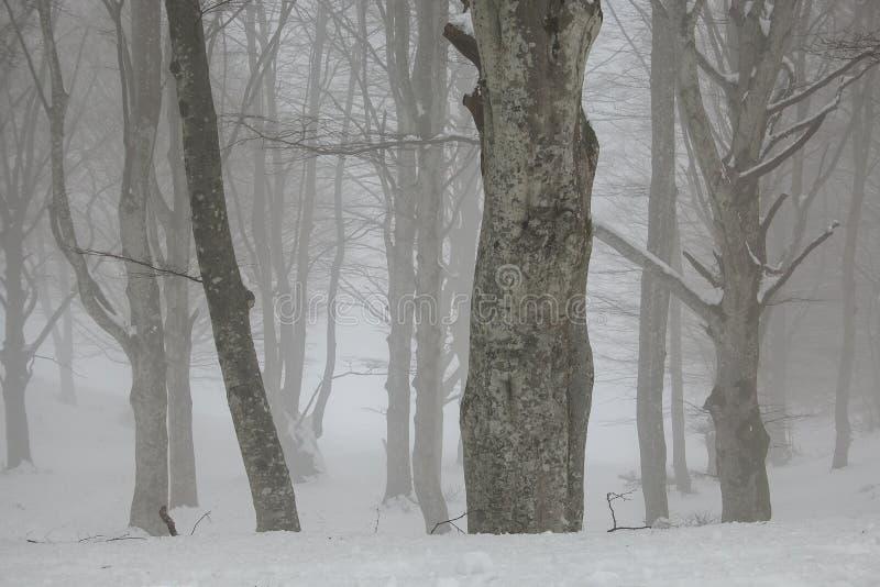 Zaczarowany tajemniczy las w zima sezonie z śniegiem obrazy royalty free