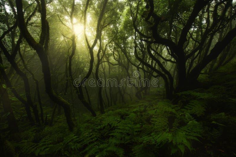 Zaczarowany zielony las zdjęcie royalty free