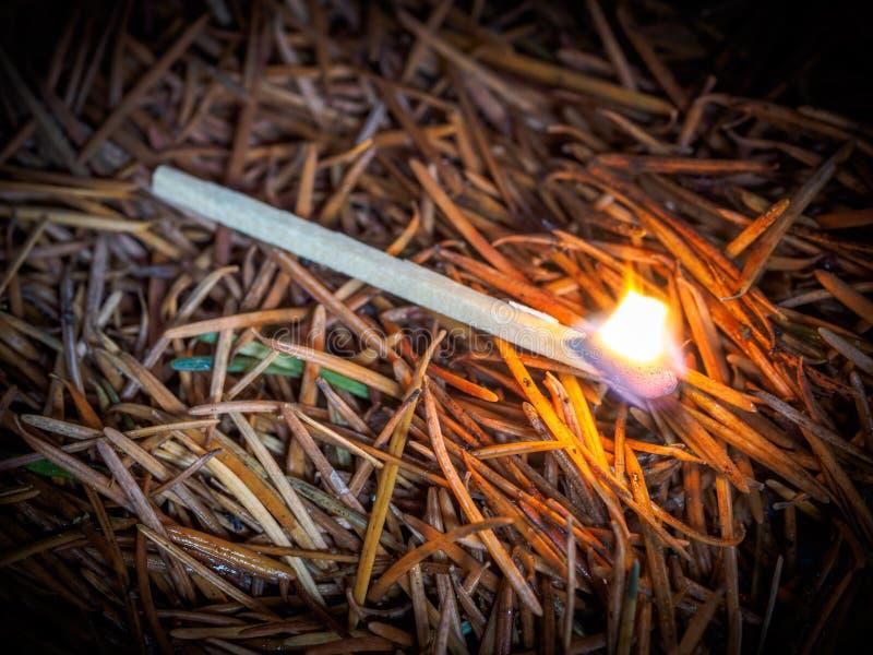 Zaczynać pożar lasu obraz stock