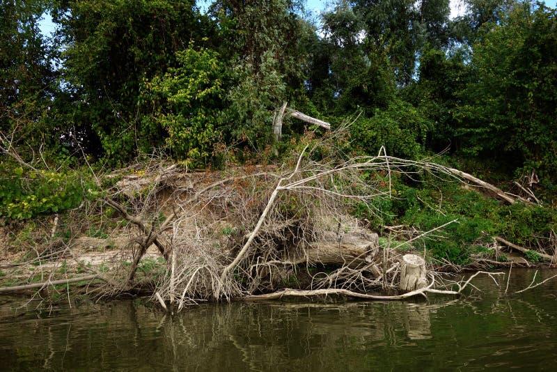 Zaczynać w jesieni przez Danube rzecznych lasów 1 obrazy royalty free