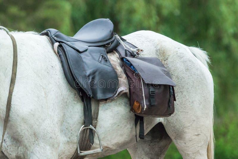 Zadel, paarduitrusting en stijgbeugels op een witte merrie royalty-vrije stock fotografie