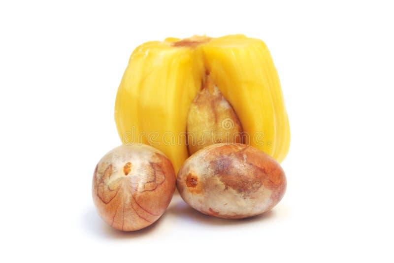 Zaden van jackfruit stock foto