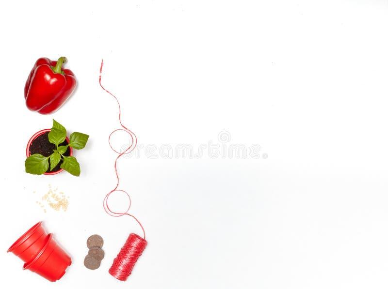 Zaden, zaailingen en verse groenten stock fotografie