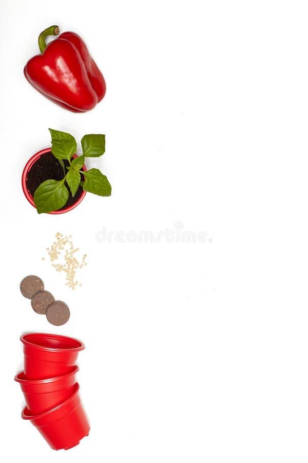 Zaden, zaailingen en verse groenten stock afbeelding