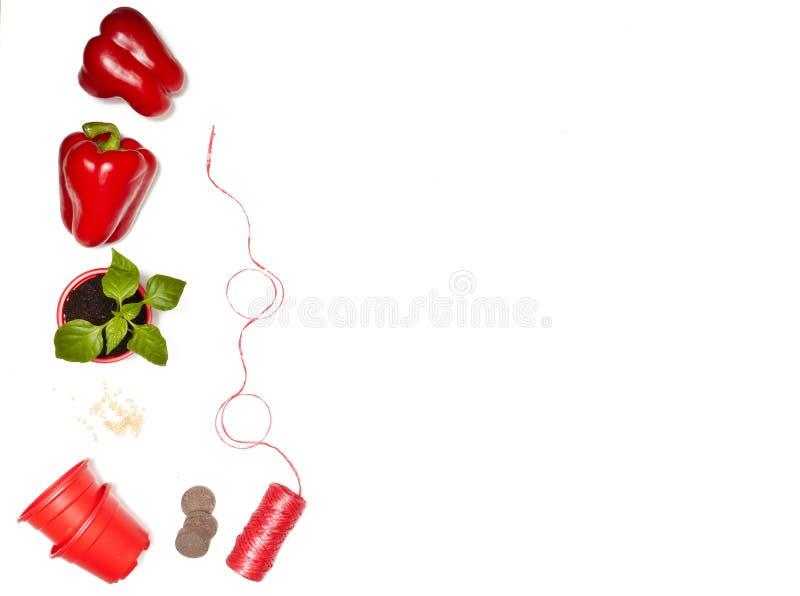 Zaden, zaailingen en verse groenten stock afbeeldingen