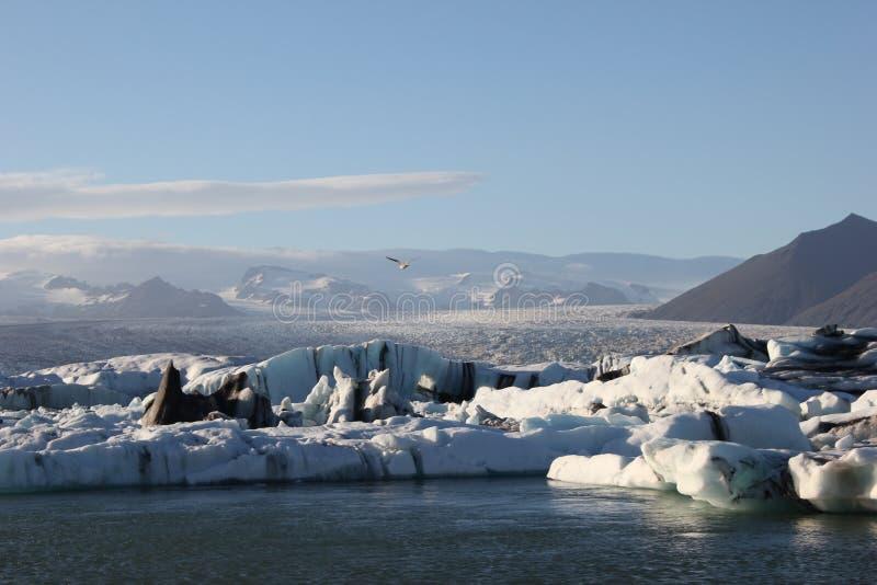 Zadziwiać kawałki lodowi floes obrazy stock