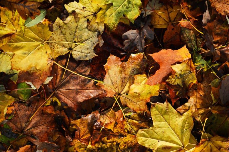 Zadziwiać kolory jesień i czas kolory bogaci i żywi obrazy stock