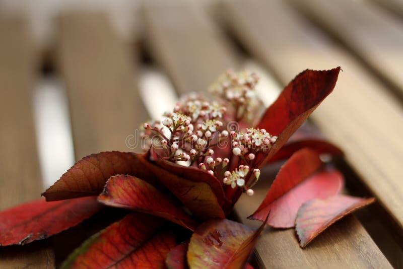 Zadziwiać kwiatu szczegół zdjęcia royalty free