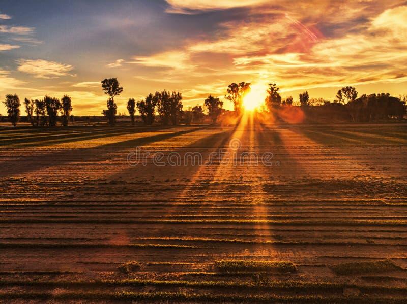 Zadziwiający zmierzch w wsi nad kultywujący pola i słońcu między drzewami rozprzestrzenia swój promienie zdjęcie stock