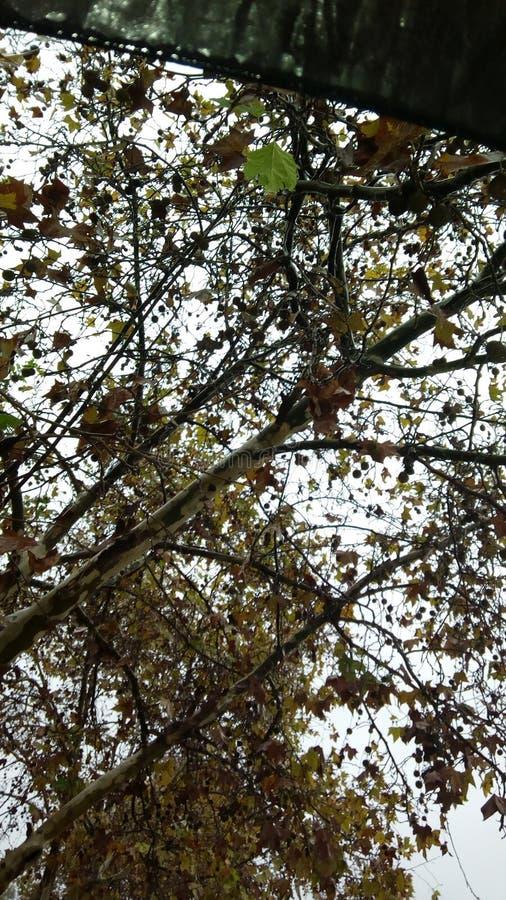 Zadziwiająca jesień Rabat Maroko zdjęcia royalty free