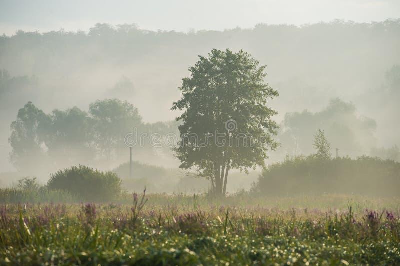 Zadziwiająca krajobrazowa ranek mgła w wsi zdjęcie royalty free