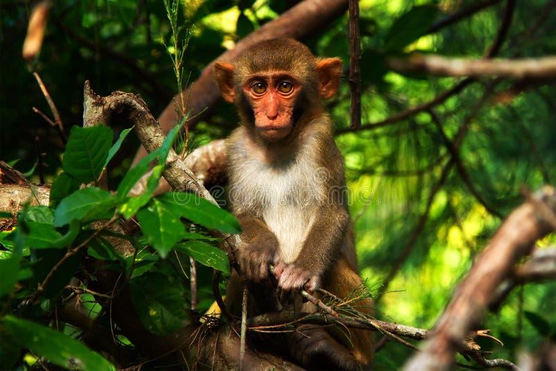 Zadziwiająca małpa fotografia royalty free