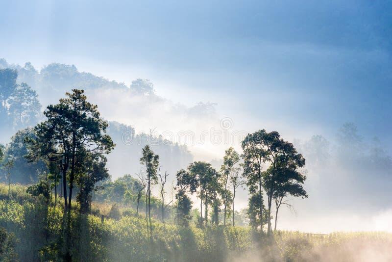 Zadziwiająca mgła rusza się nad natur górami podczas wschodu słońca zdjęcie stock