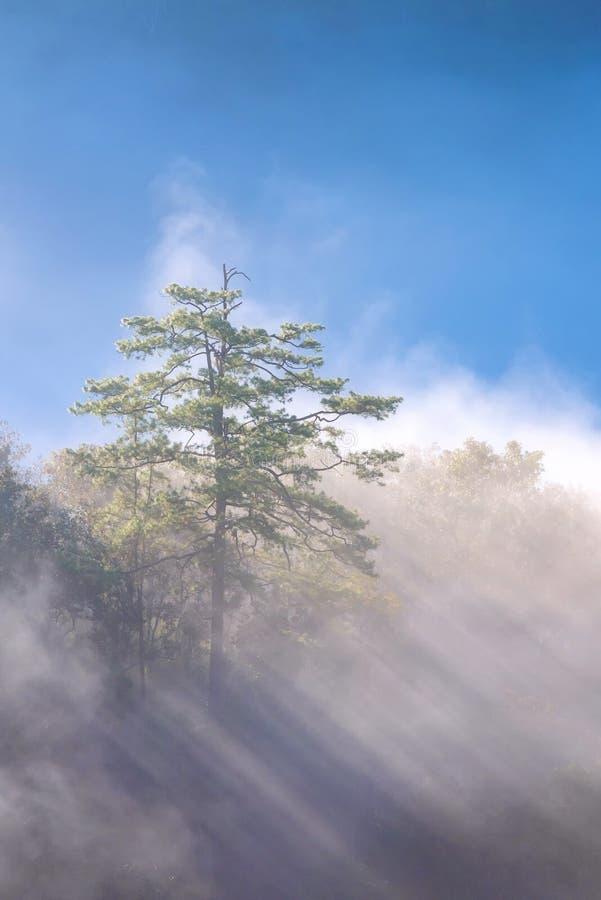 Zadziwiająca mgła rusza się nad natur górami podczas wschodu słońca obraz stock