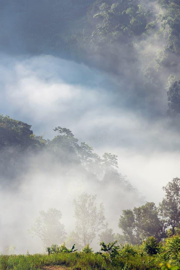 Zadziwiająca mgła rusza się nad natur górami podczas wschodu słońca zdjęcia royalty free