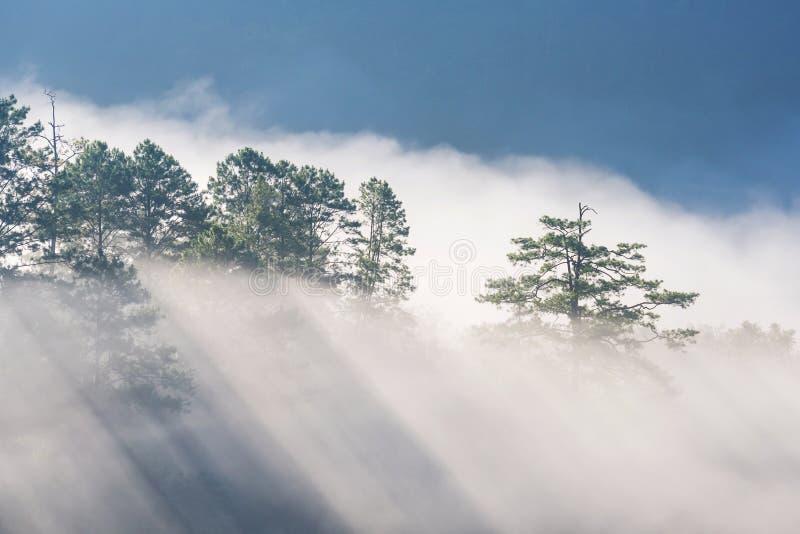 Zadziwiająca mgła rusza się nad natur górami podczas wschodu słońca zdjęcie royalty free