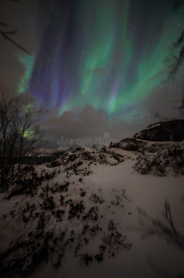 Zadziwiająca stubarwna zorza Borealis także zna gdy Północni światła w nocnym niebie nad Lofoten krajobrazem, Norwegia, Scandinav zdjęcia stock