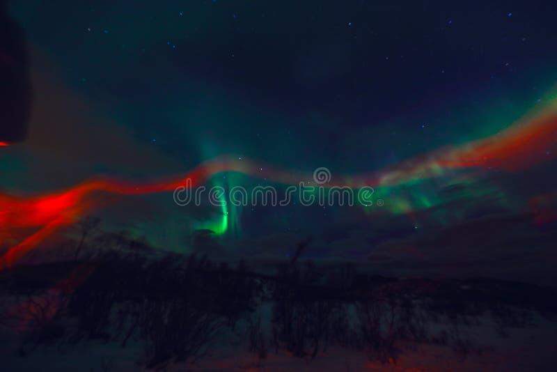 Zadziwiająca stubarwna zorza Borealis także zna gdy Północni światła w nocnym niebie nad Lofoten krajobrazem, Norwegia, Scandinav