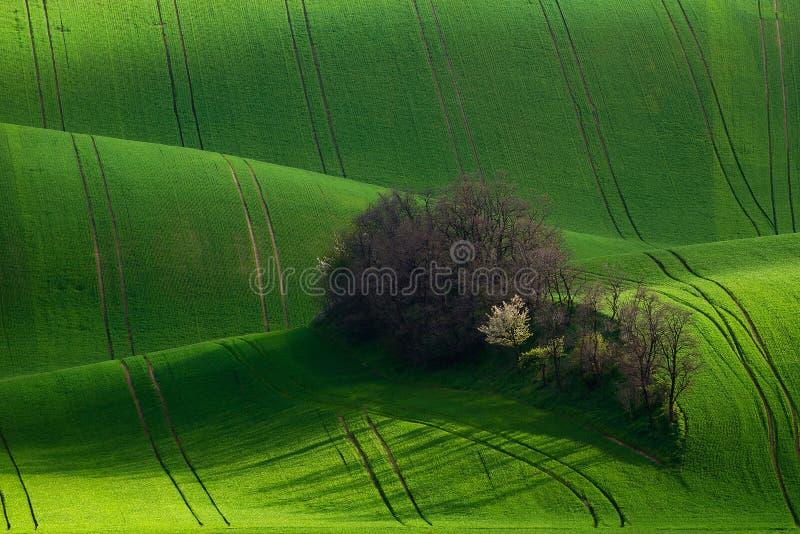 Zadziwiająca szczegół sceneria przy Południowym Morawskim polem, republika czech zdjęcia royalty free