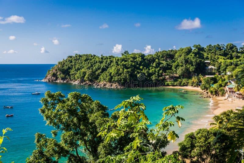 Zadziwiająca tropikalna plaża w Trinidad i Tobago, Caribe - niebieskie niebo, drzewa, piasek plaża zdjęcia royalty free