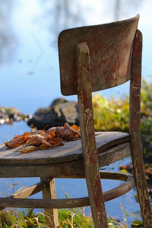 Zadziwiające rzeczy wokoło my w naturze - zapominający krzesła fotografia royalty free