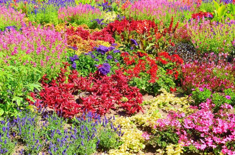 Zadziwiający łóżko kwiaty z wiele różnymi kwiatów gatunkami Cudowni kwiaty jaskrawych kolory czerwień, menchie i purpury, głownie obrazy royalty free