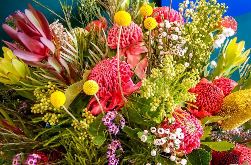 Zadziwiający Australijscy miejscowych kwiaty fotografia royalty free