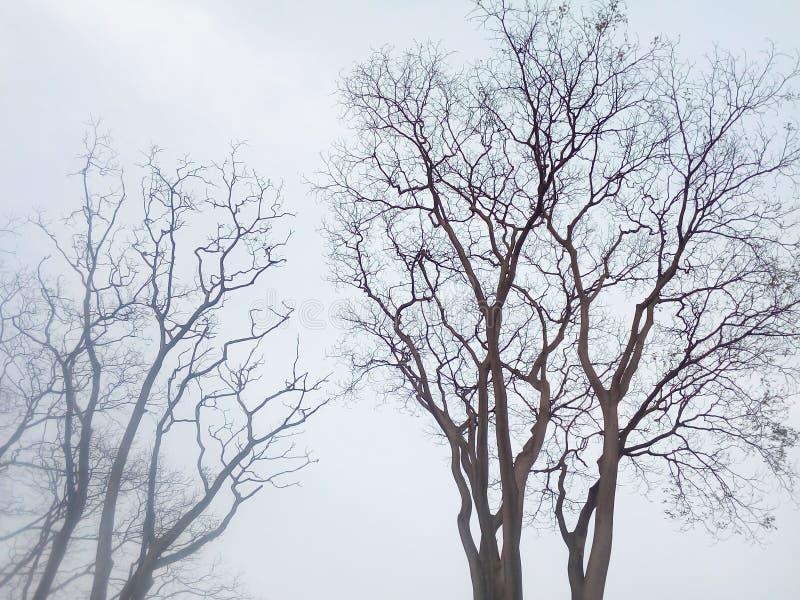 Zadziwiający drzewo zdjęcia royalty free